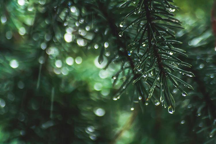 дождливые картинки