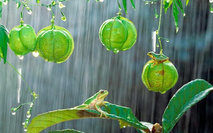 фото красивого дождя