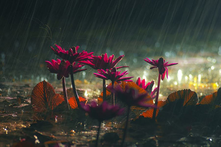 идет дождь фото