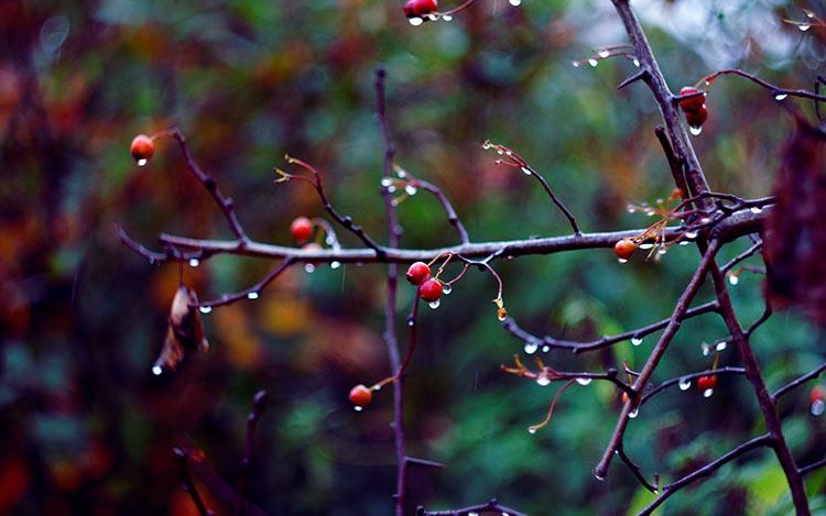 лес после дождя фото