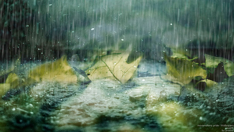 монотонный дождь фото