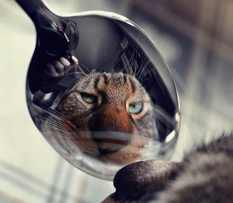 что не любят кошки как отвадить
