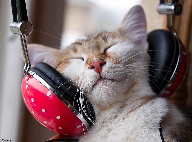 звук который не любят кошки