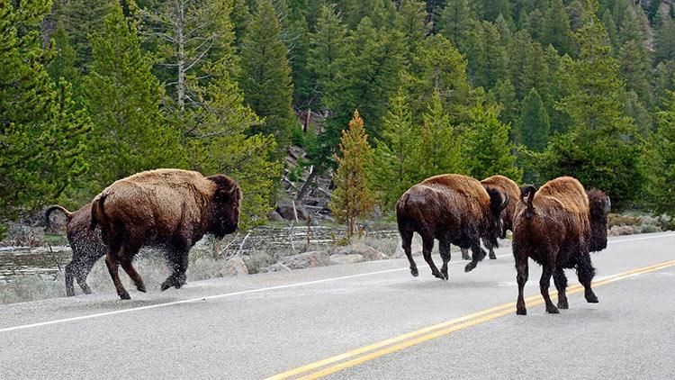 йеллоустонский национальный парк вайоминг сша фото