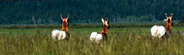 йеллоустонский национальный парк животные картинки