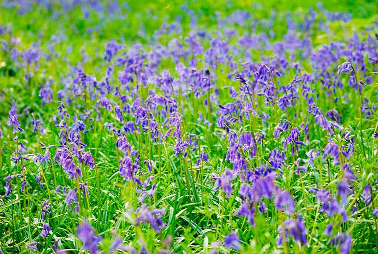 Mullingar флора