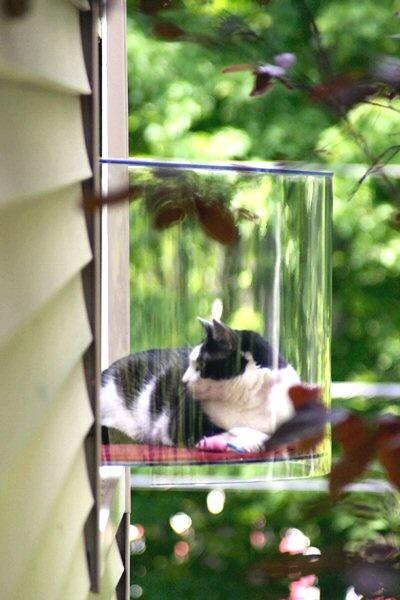 балкон для кошки на окно прогулочные веранды
