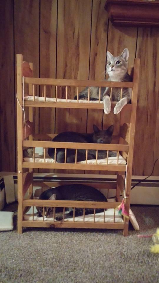 деревянные кроватки для кошек