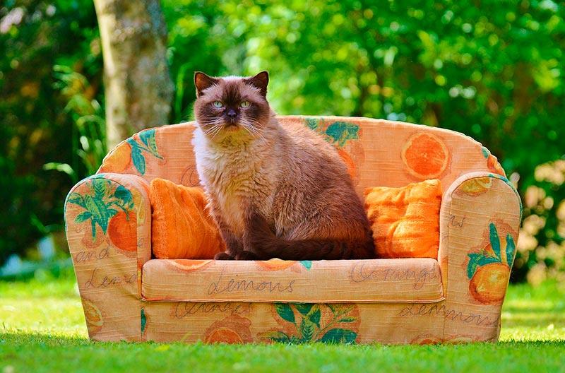 диваны для котов