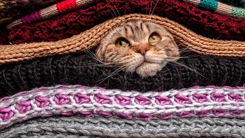 где обычно спят кошки фото