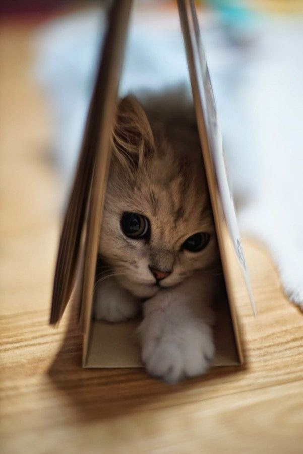 где спят домашние коты фото