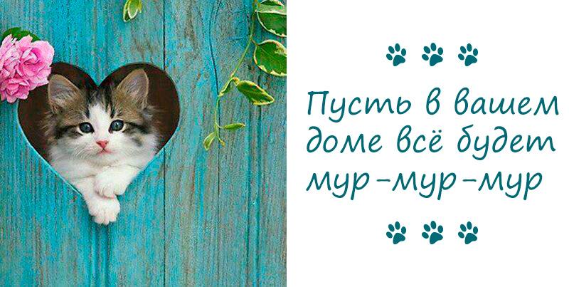 как оборудовать дом для кошки фото