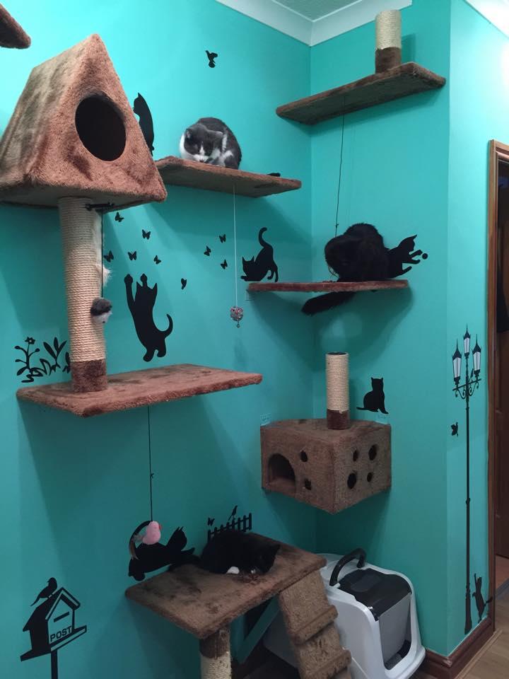 кошачьи домики фото