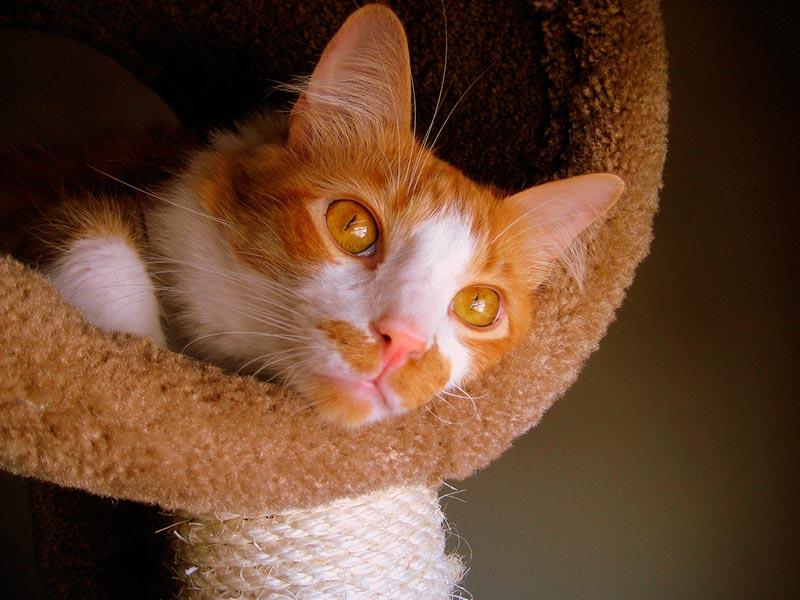 кот на когтеточке фото