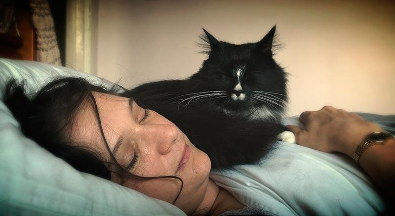 коты спят с людьми фото