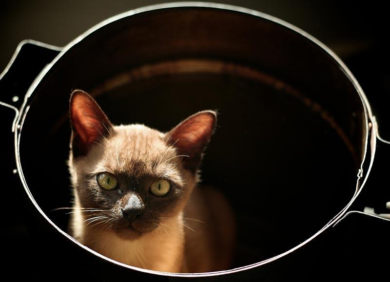 креативные домики для кошек фото
