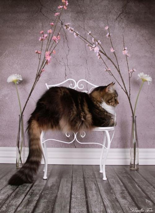 кресло для кота