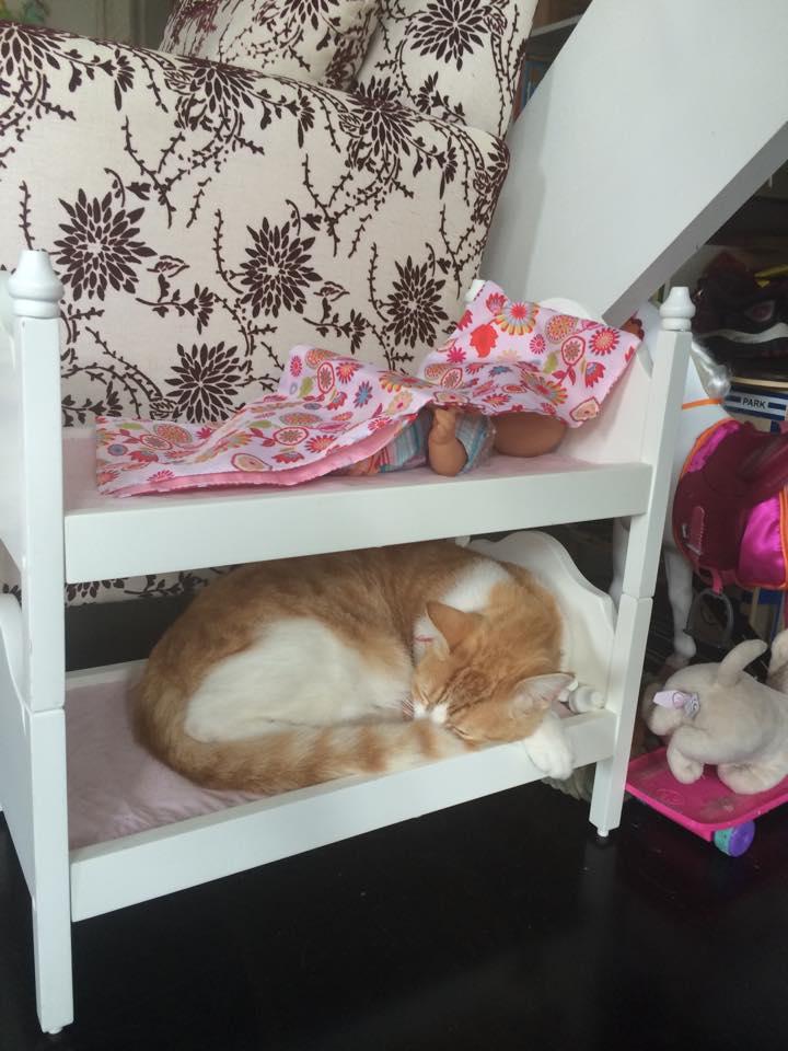 кроватки для кошек фото