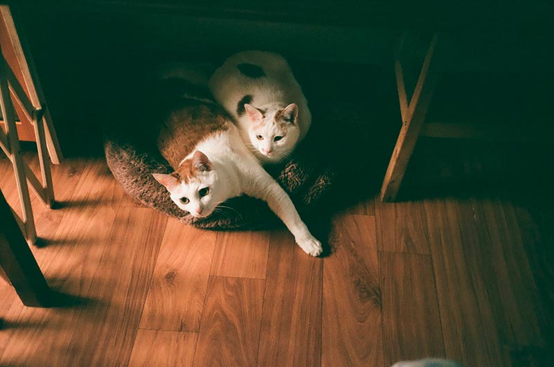 лукошко для кота