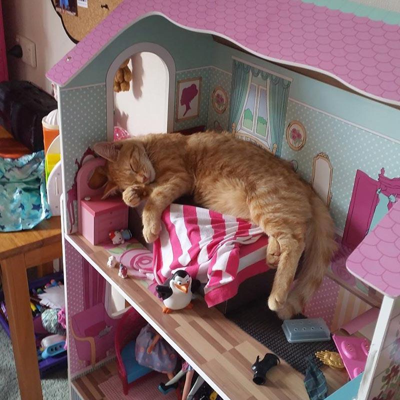 мебель для кошек фото