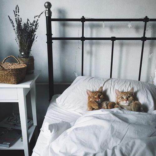 прикольные спящие коты фото картинки