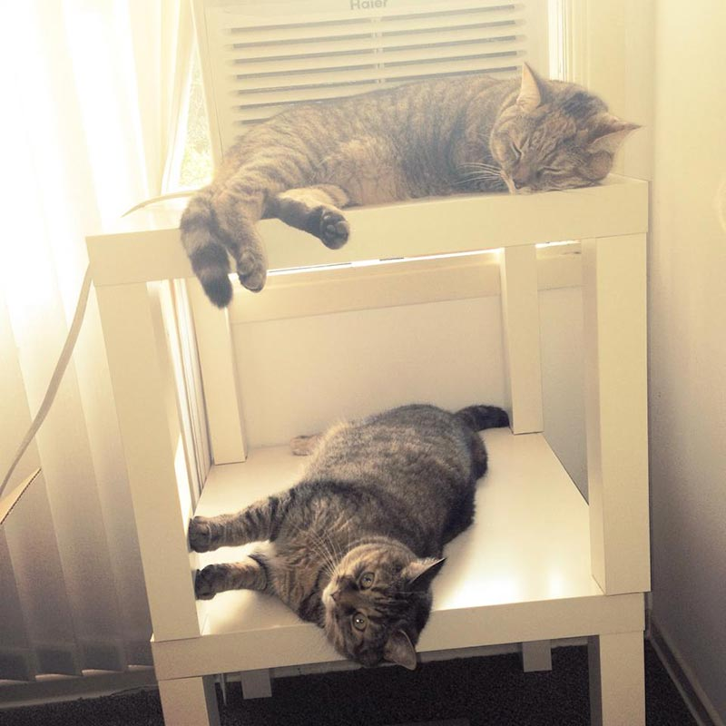 спальное место для котов