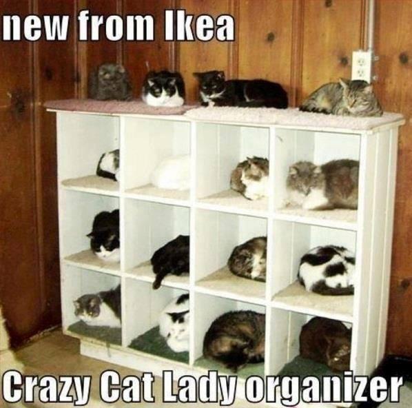 стеллажи для кошек фото