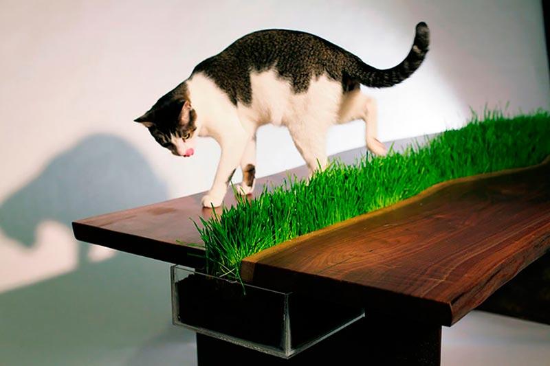 трава для кошек фото