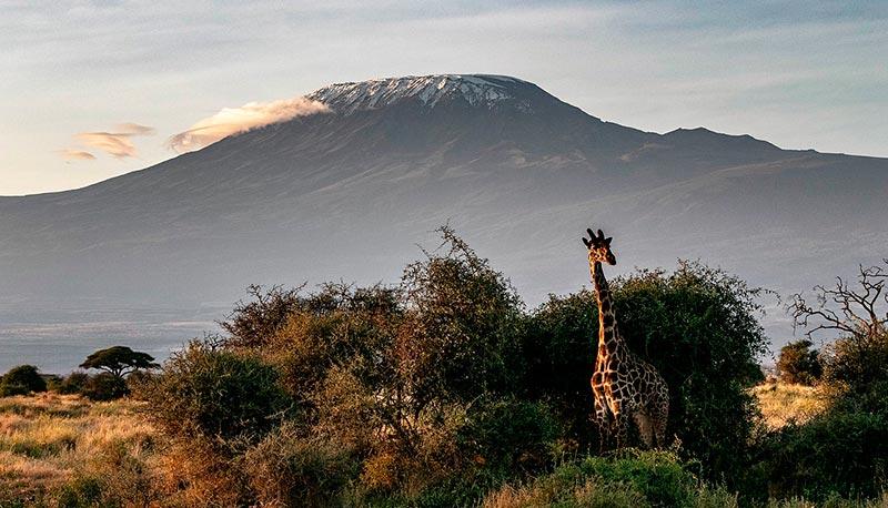 Самые крупные вулканы мира килиманджаро