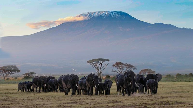 Самые крупные вулканы мира килиманджаро 2