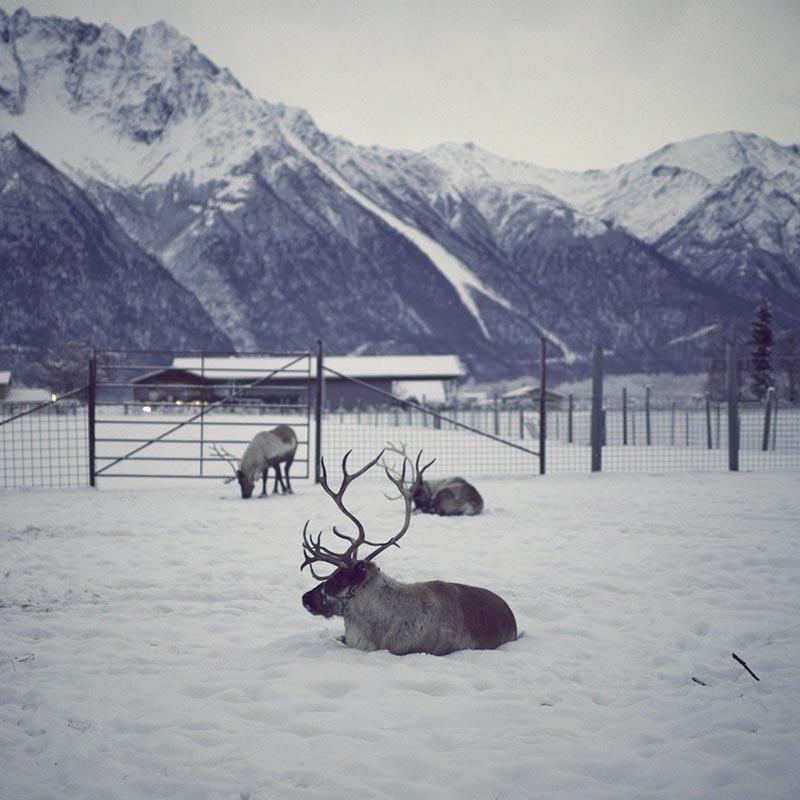 фото тундры летом и зимой 3