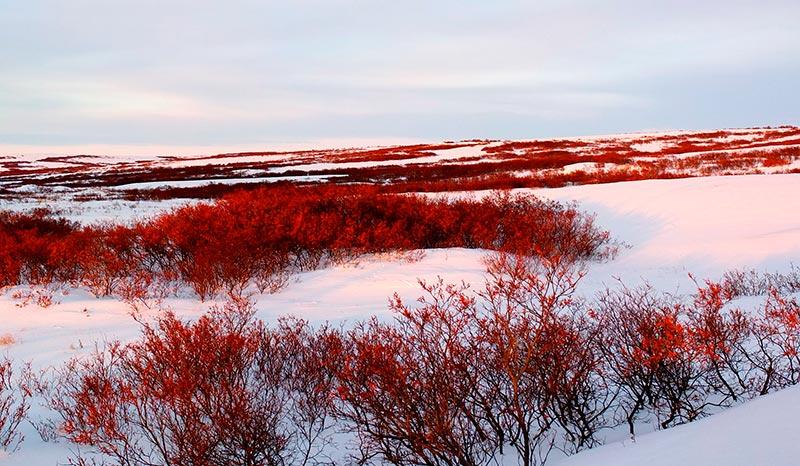 фото тундры летом и зимой 7