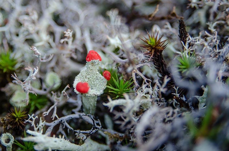животные и растения тундры фото 1