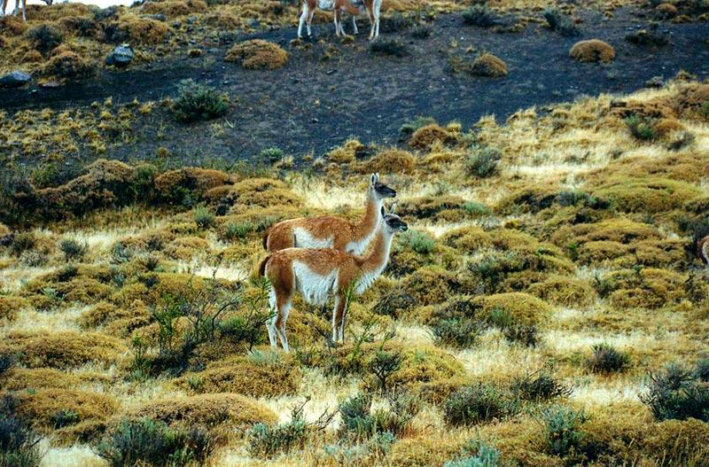 животные и растения тундры фото 6