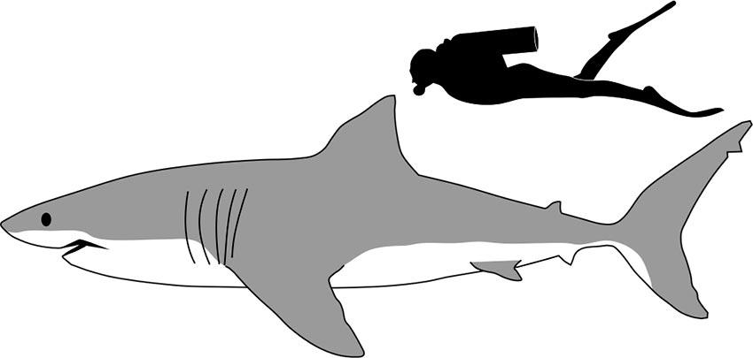 белая акула фото видео статья 2