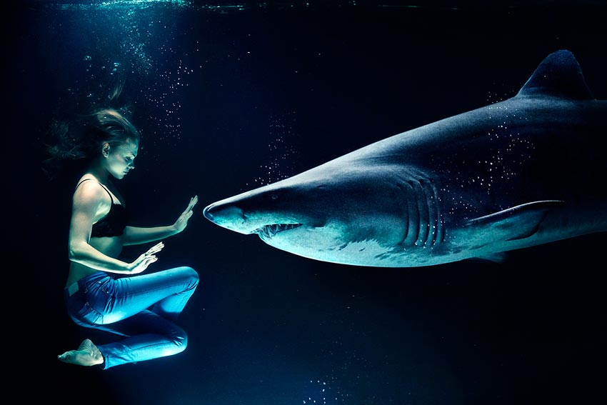 белая акула фото видео статья 7