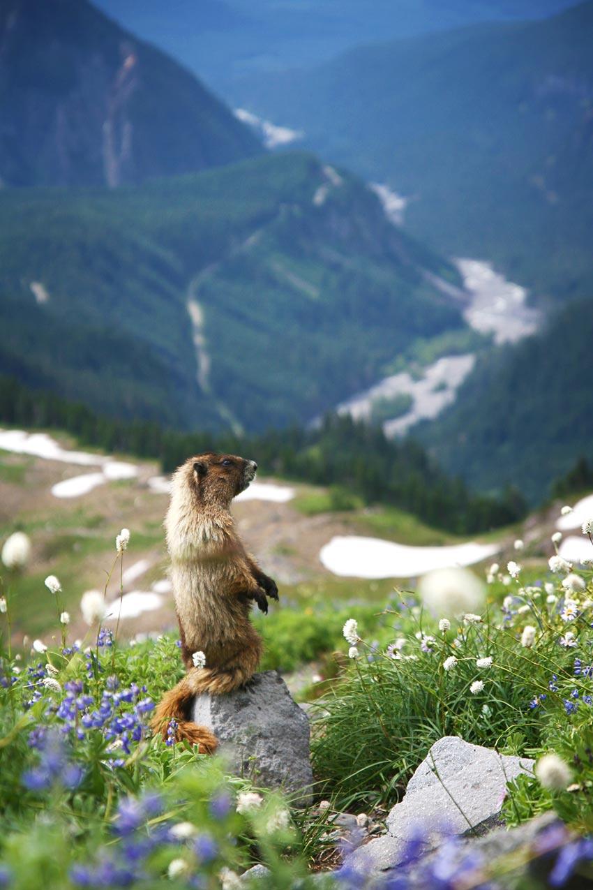 Гора Рейнир штат Вашингтон США 3