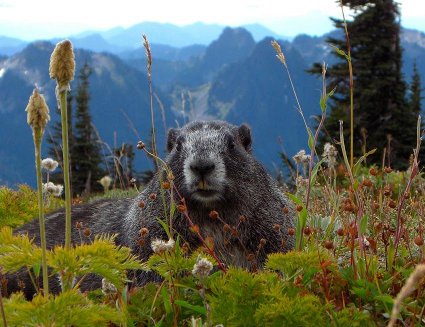 Гора Рейнир штат Вашингтон США 7