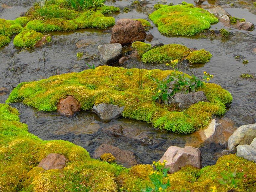 Гора Рейнир штат Вашингтон США 8