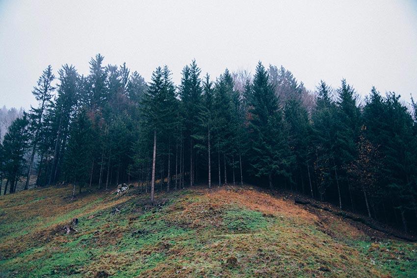Первые признаки осени в природе фото 2