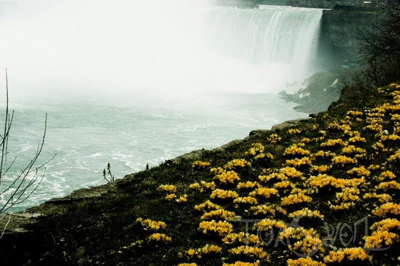 Торонто фотографии города достопримечательности 56