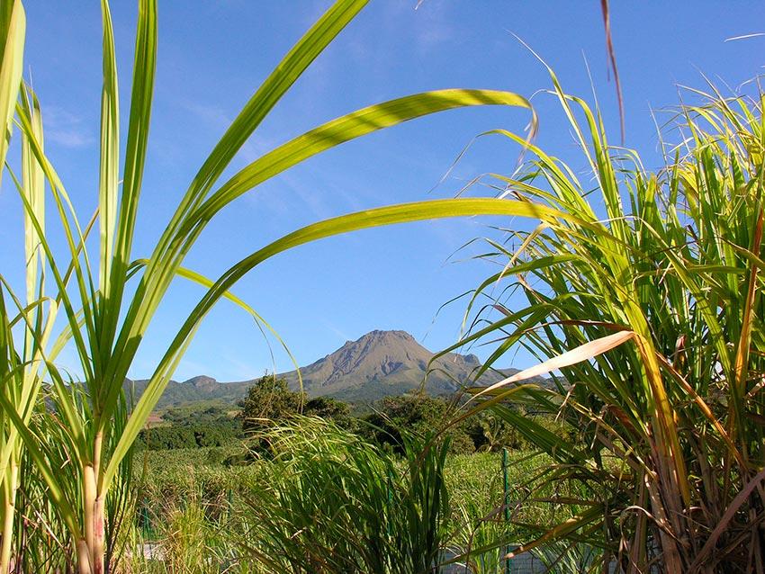 извержение мощного вулкана Мон-Пеле на Мартинике Сен-Пьер 13
