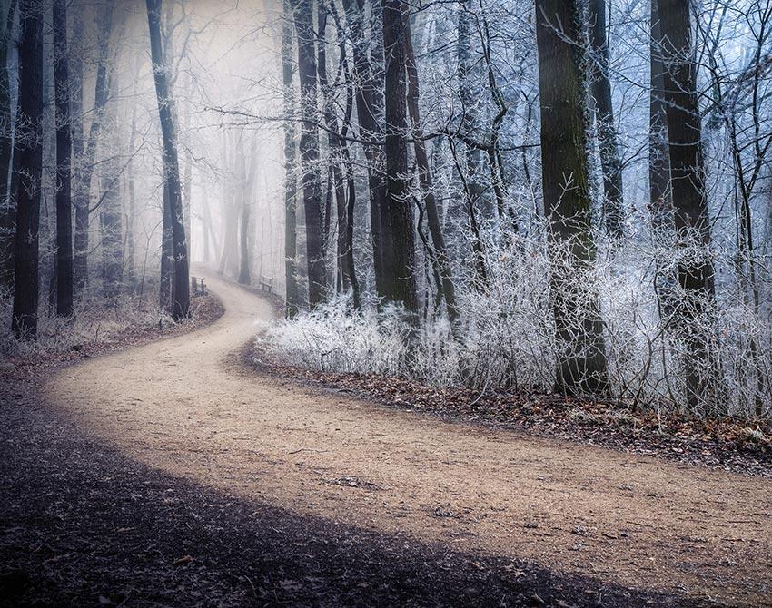 Вена зимой фото отдых 36