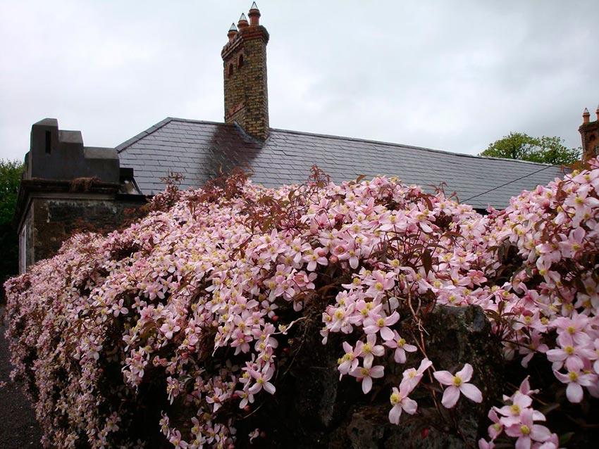 Замок Лип Ирландия фото 7