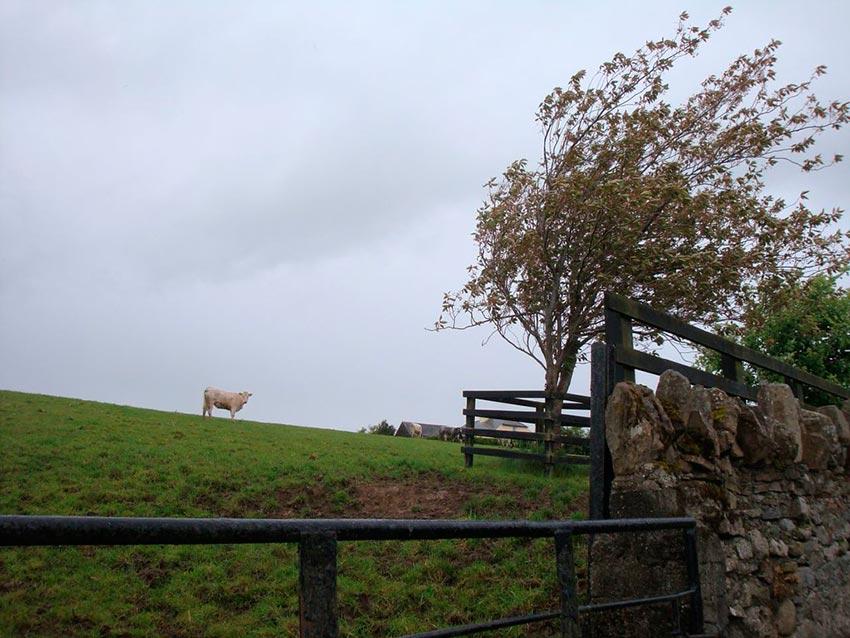Замок Лип Ирландия фото 9