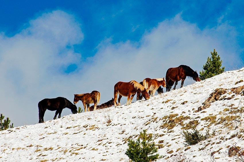 Италия зимой отдых фото видео 40