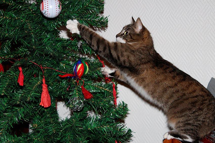 кот и новогодняя елка смешные фото 1