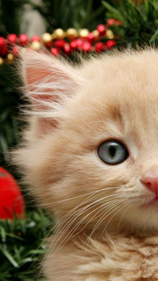 кот и новогодняя елка смешные фото 2