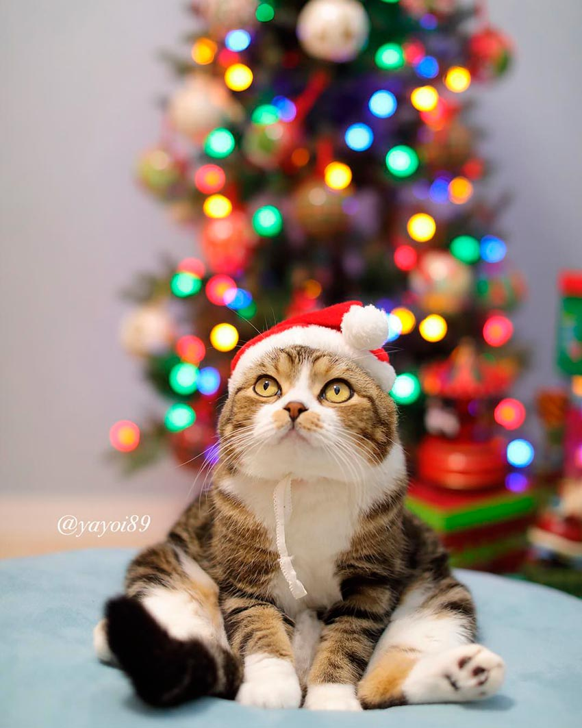 кот и новогодняя елка смешные фото 9