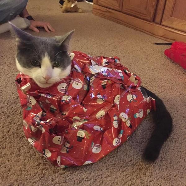 кот и новогодняя елка смешные фото 4